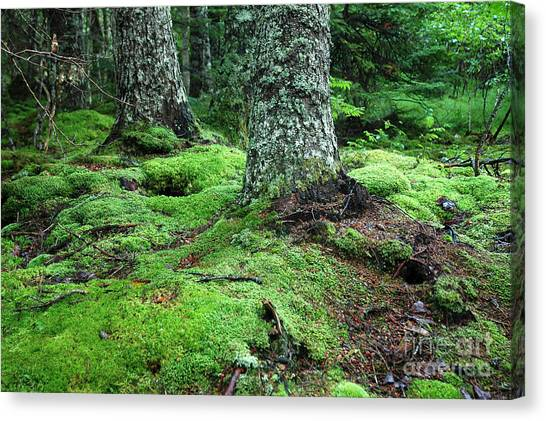 Lush Forest Canvas Print by Alan Russo