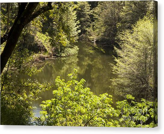 Lush Lake  Canvas Print by Juan Romagosa