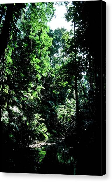 Tropical Rainforests Canvas Print - Lush Undergrowth Of Topical Rain Forest by Andrew Mcclenaghan/sciencephoto Library.