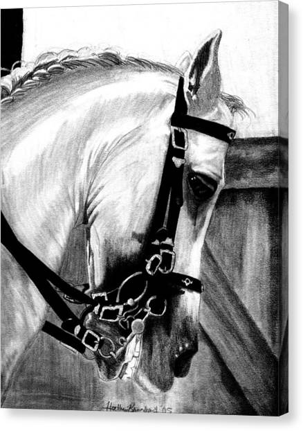 Lusitano Horse Portrait Canvas Print by Olde Time  Mercantile