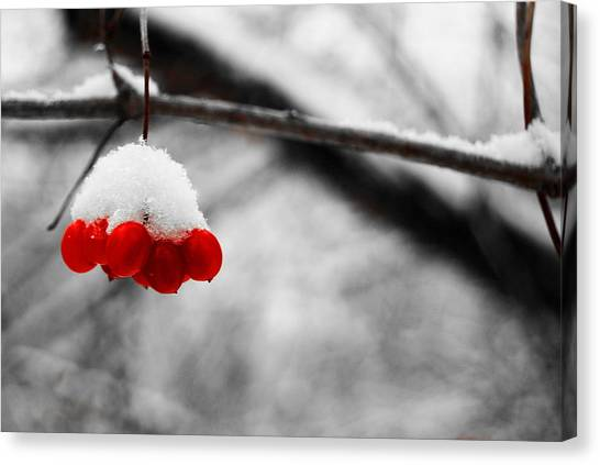 Canvas Print - Lwv50009 by Lee Wolf Winter