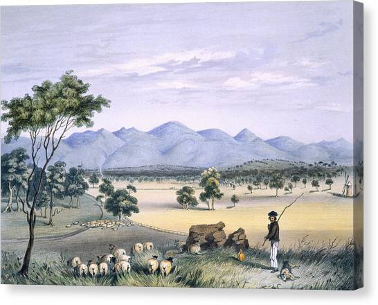 Immigration Canvas Print - Lynedoch Valley Looking Towards by George French Angas