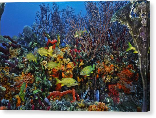 Lynns Reef On A Perfect Day Canvas Print