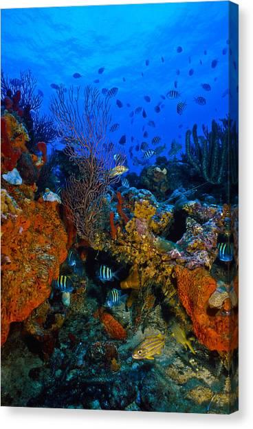 Lynns Reef Canvas Print