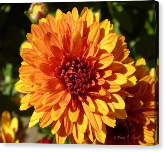 M Bright Orange Flowers Collection No. Bof3 Canvas Print