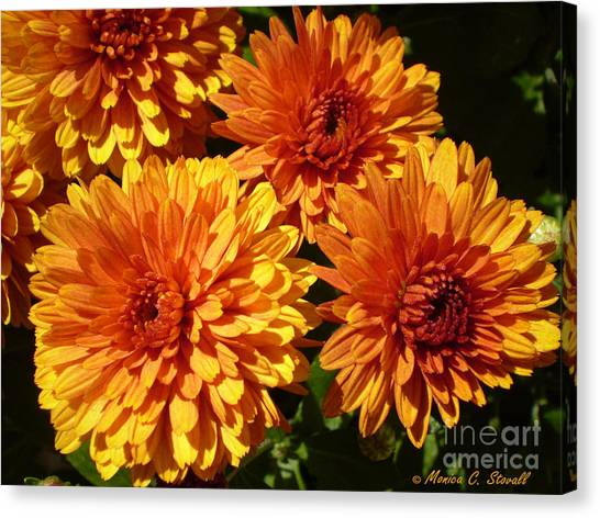 M Bright Orange Flowers Collection No. Bof4 Canvas Print