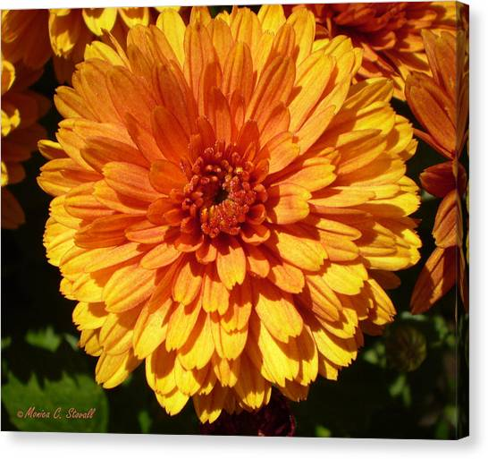 M Bright Orange Flowers Collection No. Bof5 Canvas Print