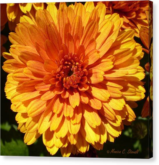 M Bright Orange Flowers Collection No. Bof7 Canvas Print