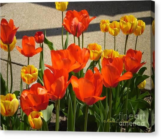 M Color Combination Flowers Collection No. Cc3 Canvas Print