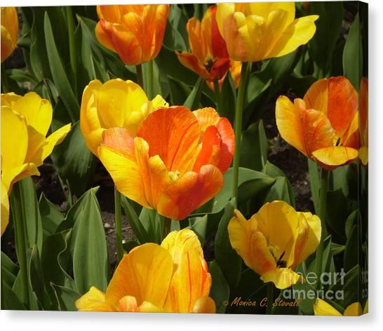 M Color Combination Flowers Collection No. Cc7 Canvas Print