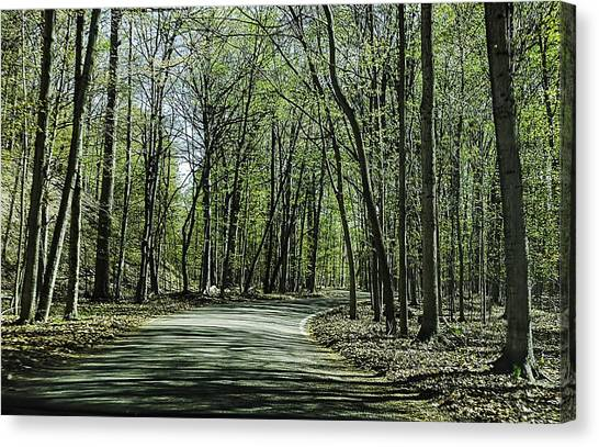 M119 Tunnel Of Trees Michigan Canvas Print