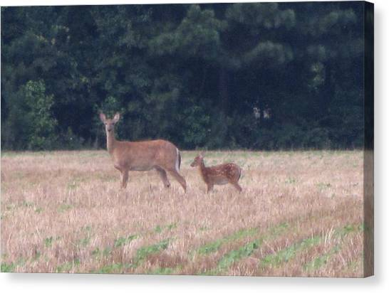 Mable The Female Deer With Harriet The Baby Fawn Canvas Print by Debbie Nester