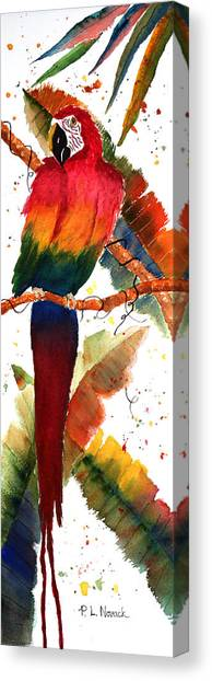 Macaw Feathers Canvas Print by Patricia Novack