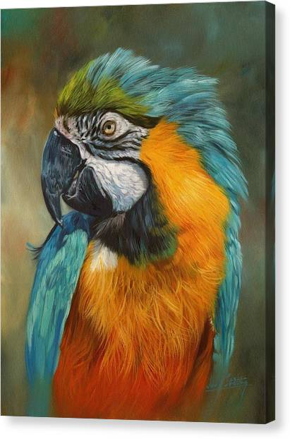 Macaws Canvas Print - Macaw Parrot by David Stribbling