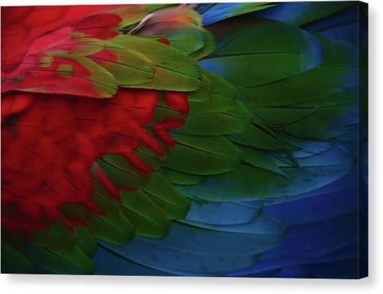 Macaw Canvas Print - Macaw Plumage Detail by Diego Lezama