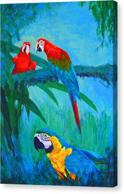 Macaw Trio Canvas Print