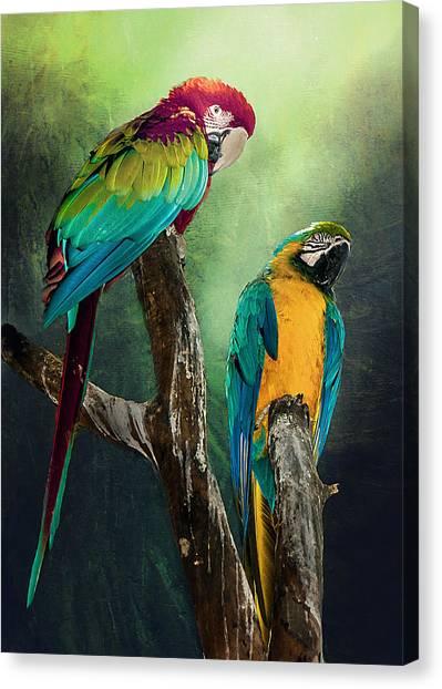 Macaws Siesta Time Canvas Print
