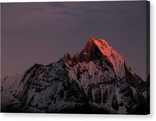 Mountain Sunset Canvas Print - Machhapuchhare. Machapuchare by Richard Le Manz