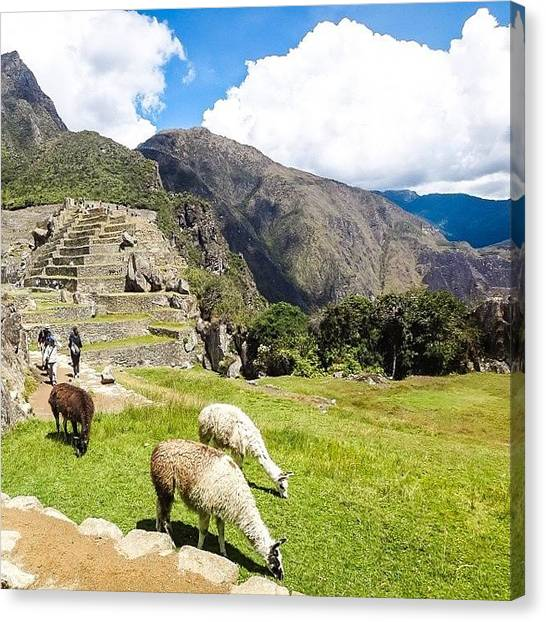 Llamas Canvas Print - #machupicchu #peru #llamas #sky by Blogatrixx
