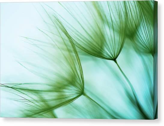Macro Dandelion Seed Canvas Print by Jasmina007