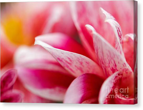 Macro Image Of A Pink Flower Canvas Print