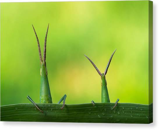 Grasshoppers Canvas Print - Macro by Mehdi Kamran