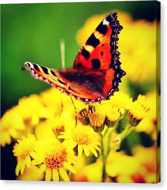 Insects Canvas Print - #macro #nature #flowers #butterfly by Luisa Azzolini