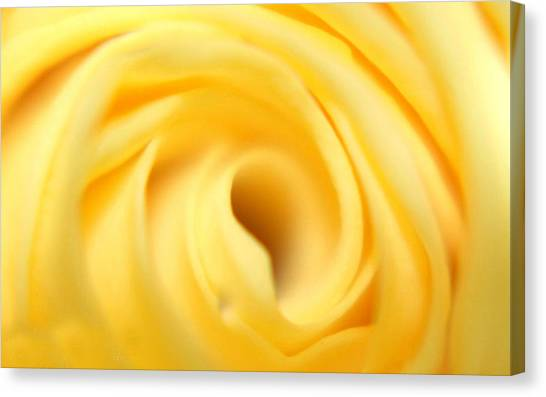 Macro Yellow Rose Canvas Print