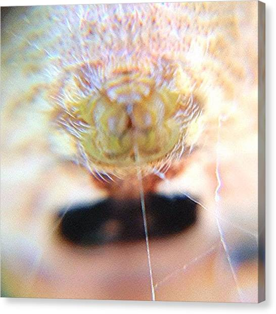 Spider Web Canvas Print - #macromonday #md_macro #spider #web by Jim Neeley