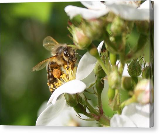 Mad Honeybee Canvas Print