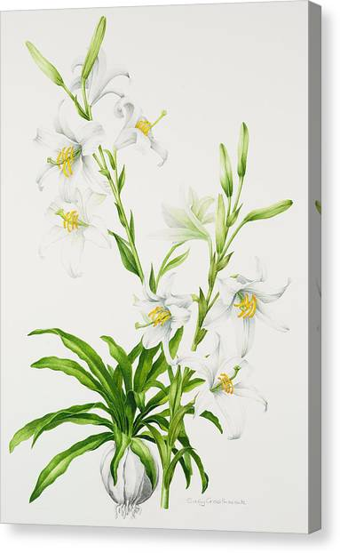 In Bloom Canvas Print - Madonna Lily by Sally Crosthwaite