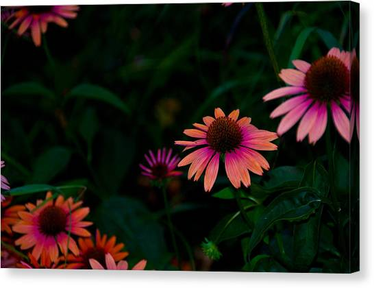 Magenta And Orange Canvas Print