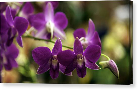 Magenta Orchids Canvas Print