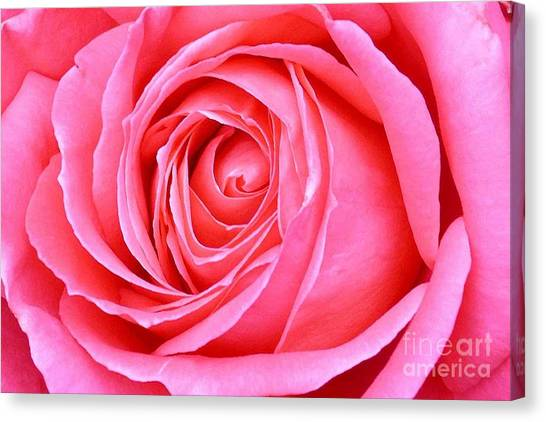 Magenta Rose Canvas Print