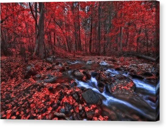Magic Forest 1 Canvas Print