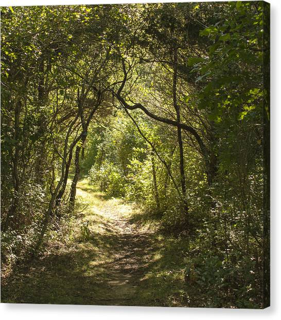 Magic Forest Welcome Canvas Print
