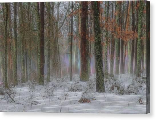 Magic In The Fog 2 Canvas Print