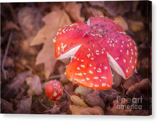 Magic Mushroom Canvas Print