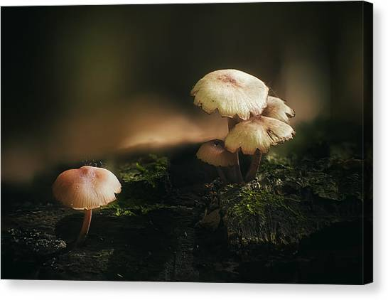 Mushrooms Canvas Print - Magic Mushrooms by Scott Norris