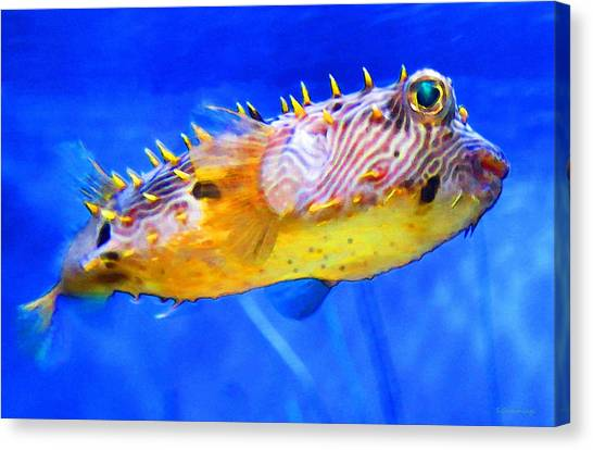 Scuba Diving Canvas Print - Magic Puffer - Fish Art By Sharon Cummings by Sharon Cummings