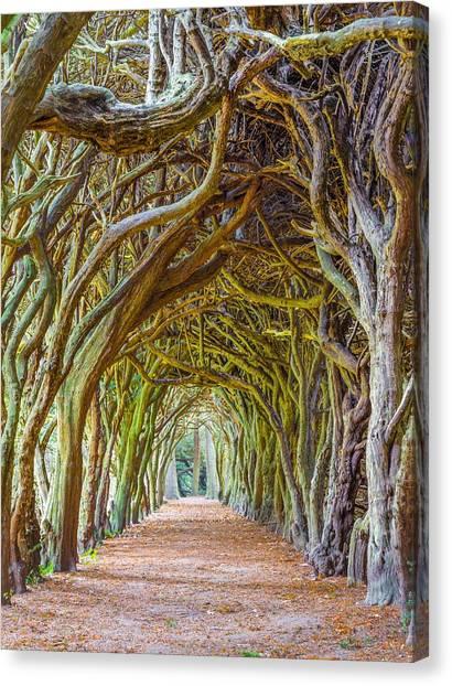 Magic Yew Canvas Print