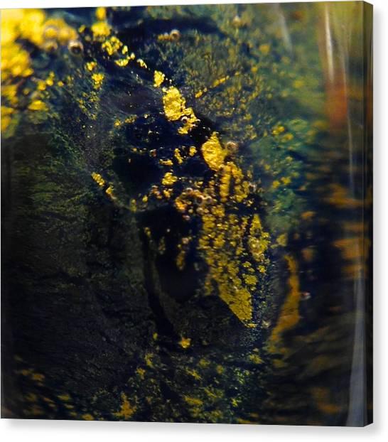 Magical Dust Canvas Print