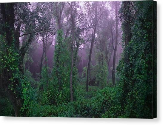 Magical Fairy Forest Canvas Print