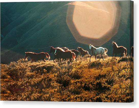 Canvas Print featuring the painting Magical Herd by Melinda Hughes-Berland