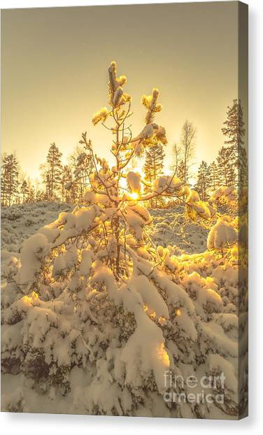 Magical Moments In The Middle Of January Canvas Print