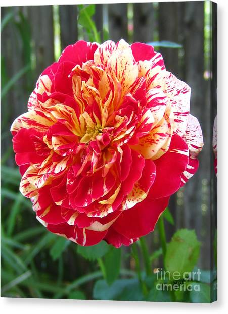 Magical Rose Canvas Print