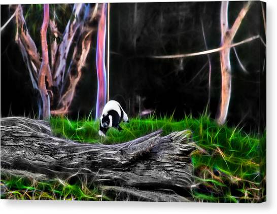 Walk In Magical Land Of The Black And White Ruffed Lemur Canvas Print