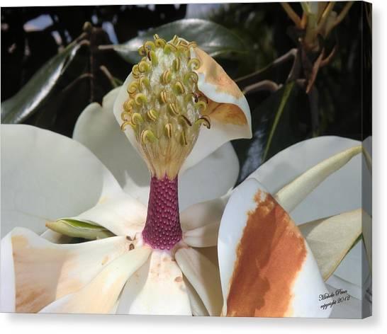 Magnolia Magnicence  Canvas Print