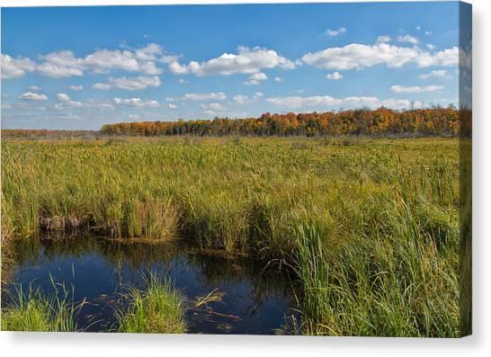 Magnificent Minnesota Marshland Canvas Print