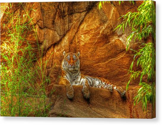 Magnificent Tiger Resting Canvas Print